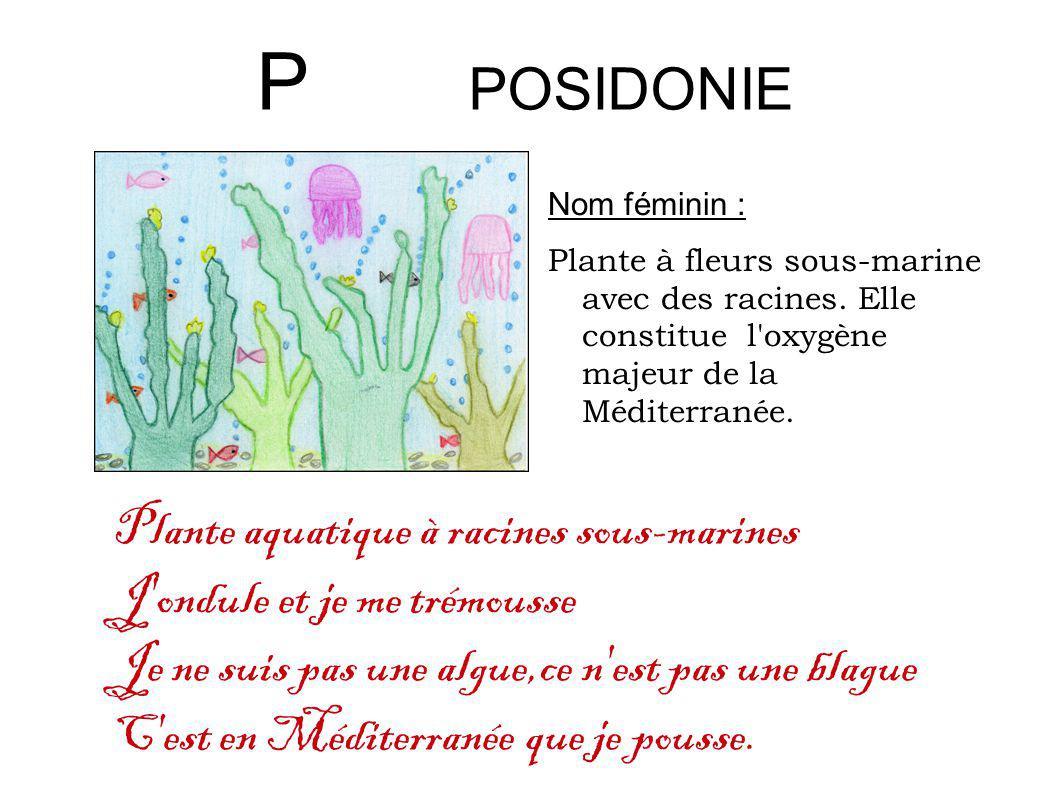 P POSIDONIE Nom féminin : Plante à fleurs sous-marine avec des racines. Elle constitue l'oxygène majeur de la Méditerranée. Plante aquatique à racines