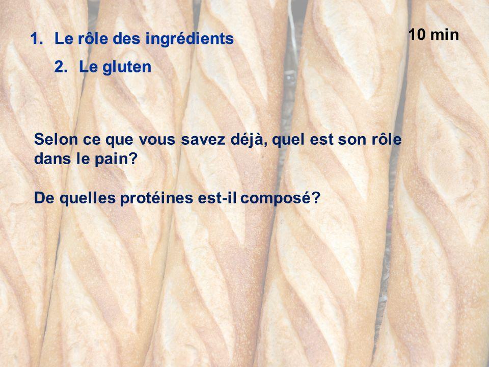 10 min Selon ce que vous savez déjà, quel est son rôle dans le pain? De quelles protéines est-il composé?