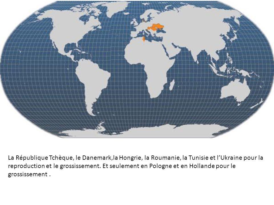 La République Tchèque, le Danemark,la Hongrie, la Roumanie, la Tunisie et lUkraine pour la reproduction et le grossissement.