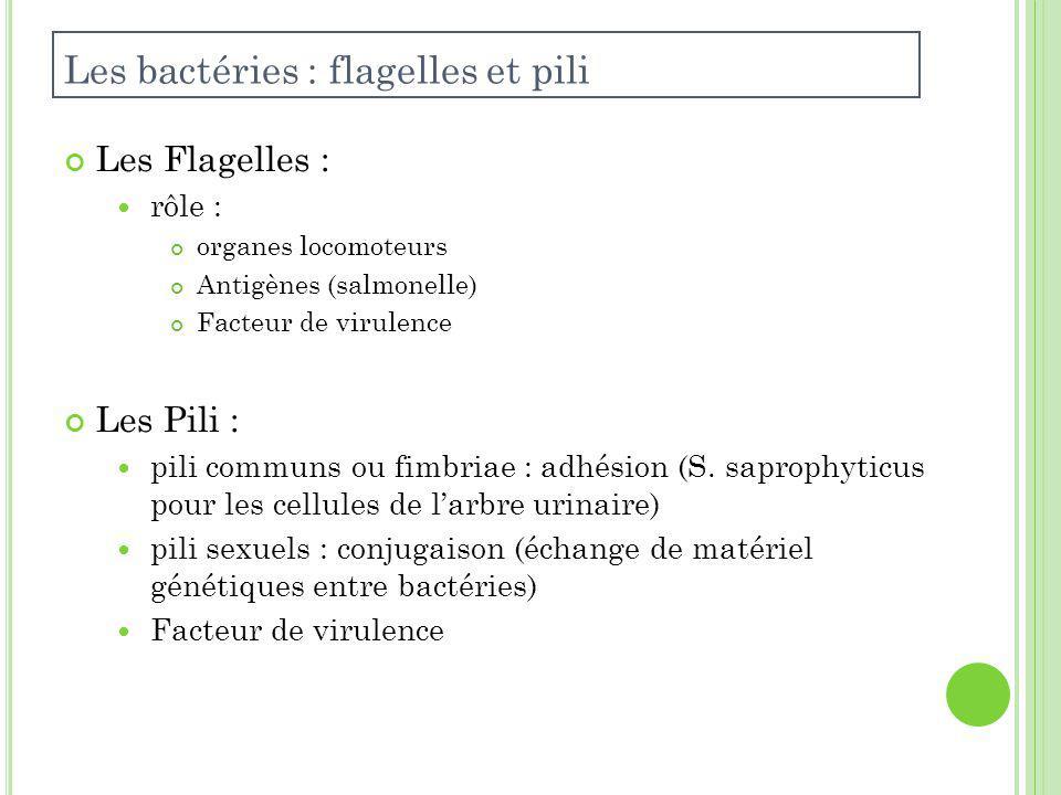 Les Flagelles : rôle : organes locomoteurs Antigènes (salmonelle) Facteur de virulence Les Pili : pili communs ou fimbriae : adhésion (S.