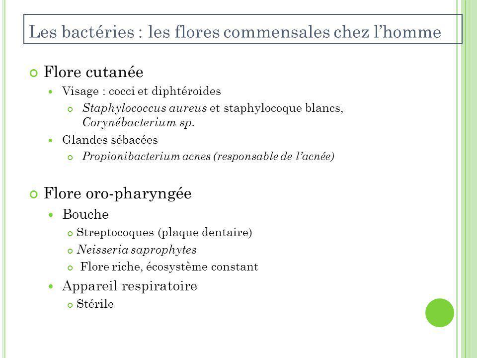 Flore cutanée Visage : cocci et diphtéroides Staphylococcus aureus et staphylocoque blancs, Corynébacterium sp.