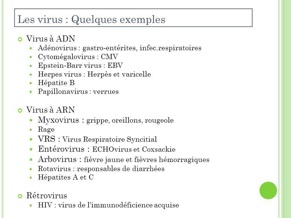 Virus à ADN Adénovirus : gastro-entérites, infec.respiratoires Cytomégalovirus : CMV Epstein-Barr virus : EBV Herpes virus : Herpès et varicelle Hépatite B Papillonavirus : verrues Virus à ARN Myxovirus : grippe, oreillons, rougeole Rage VRS : Virus Respiratoire Syncitial Entérovirus : ECHOvirus et Coxsackie Arbovirus : fièvre jaune et fièvres hémorragiques Rotavirus : responsables de diarrhées Hépatites A et C Rétrovirus HIV : virus de limmunodéficience acquise Les virus : Quelques exemples