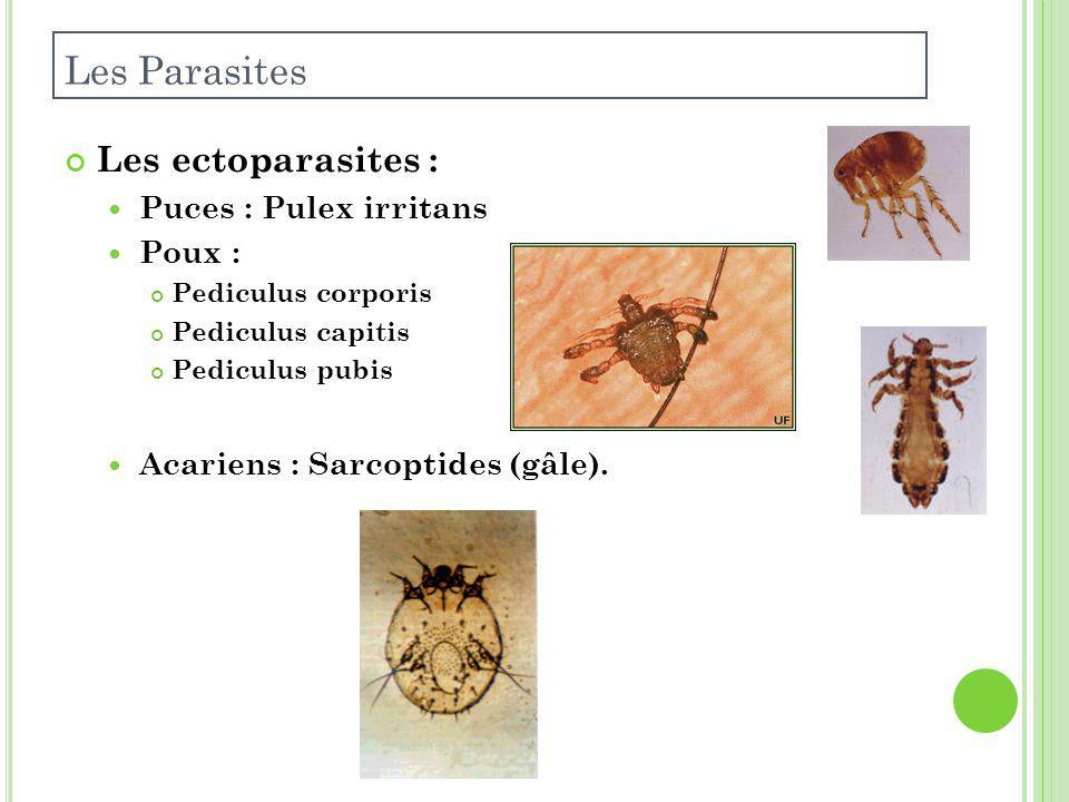 Les ectoparasites : Puces : Pulex irritans Poux : Pediculus corporis Pediculus capitis Pediculus pubis Acariens : Sarcoptides (gâle).