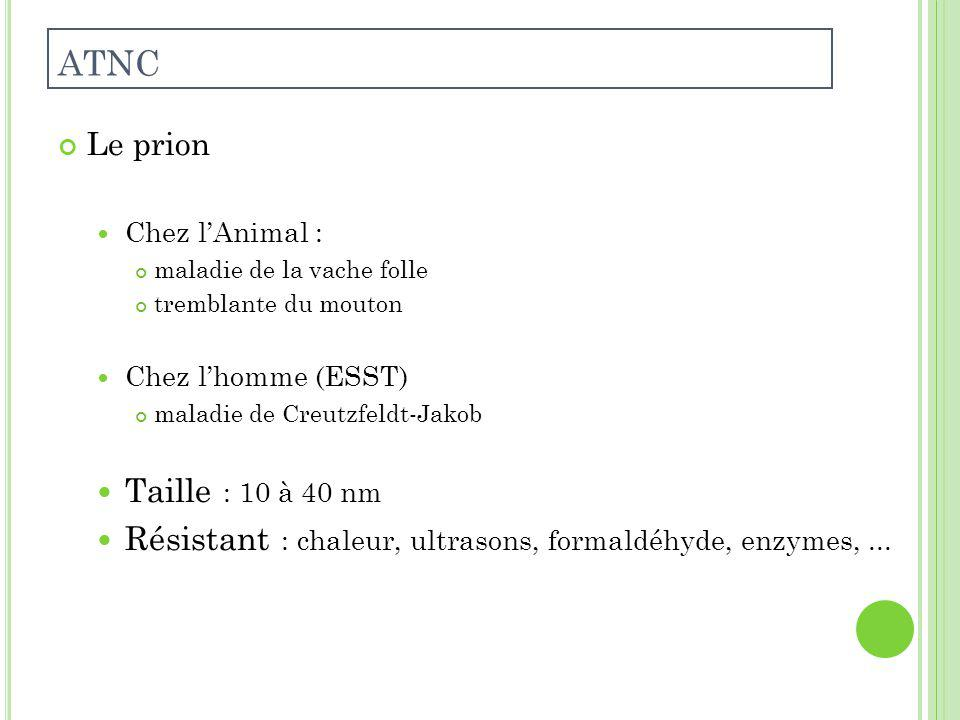 Le prion Chez lAnimal : maladie de la vache folle tremblante du mouton Chez lhomme (ESST) maladie de Creutzfeldt-Jakob Taille : 10 à 40 nm Résistant : chaleur, ultrasons, formaldéhyde, enzymes,...