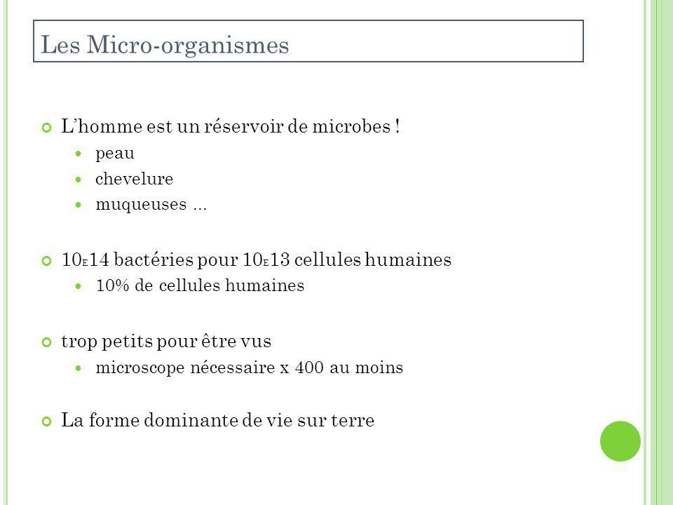 Lhomme est un réservoir de microbes .peau chevelure muqueuses...