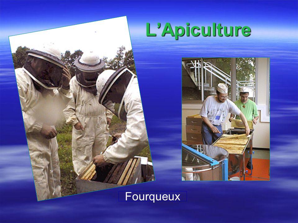 LApiculture Fourqueux