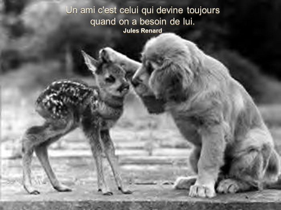 Création Béatrice Cailleret images trouvées sur le net L amitié c est comme une fleur il faut en prendre soin
