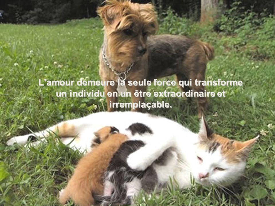 L amour demeure la seule force qui transforme un individu en un être extraordinaire et irremplaçable.