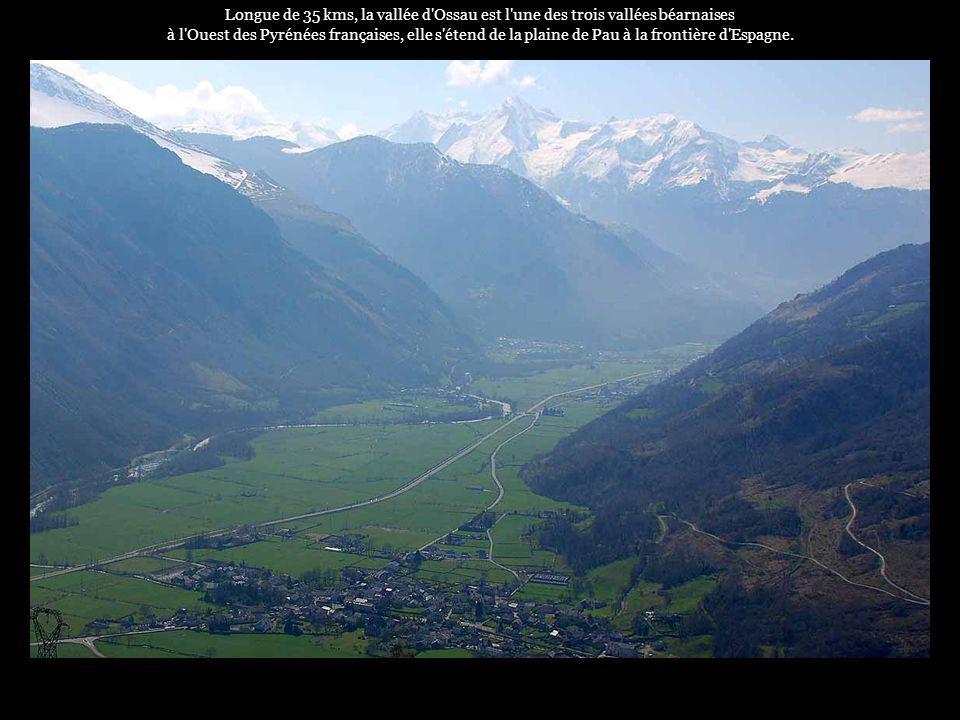 . La transhumance est un moment important dans la vie pastorale de la vallée dOssau...
