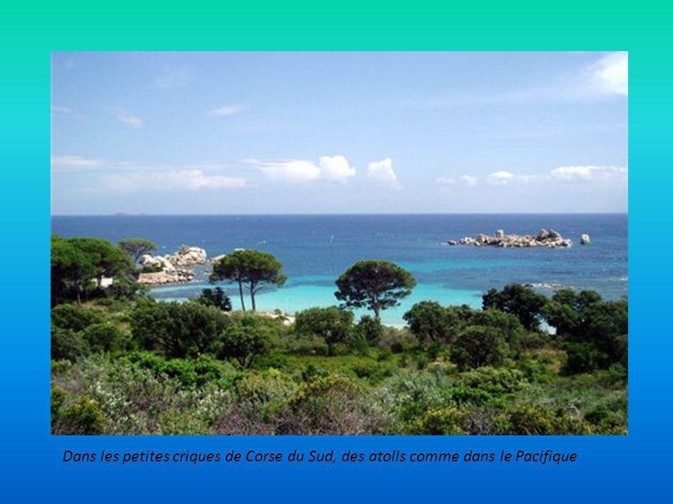 Se croire en Angleterre, en Bretagne, au Cap Fréhel entre landes et bruyères