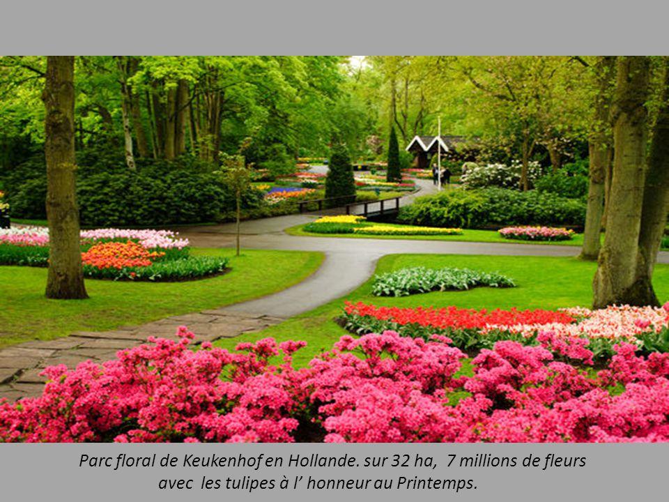 Parc floral de Keukenhof en Hollande.