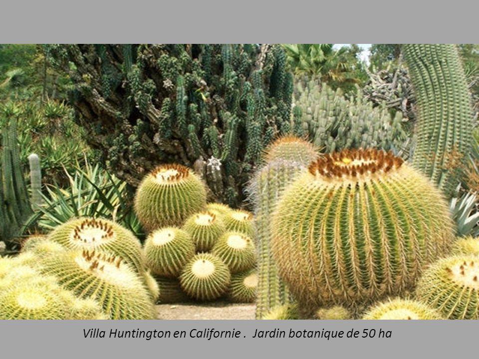 Villa Huntington en Californie. Jardin botanique de 50 ha
