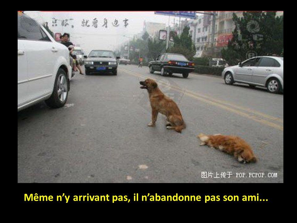 Le petit chien essaye de le pousser hors du trafic.