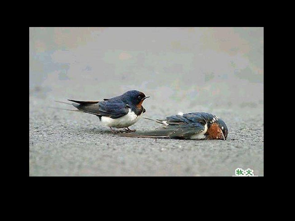 Petit oiseau lui aussi veillé par un congénère.