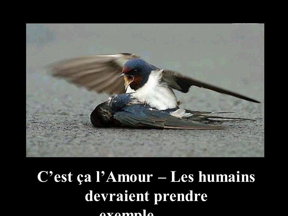 Il paraît que de nombreux oiseaux survolent quelques temps le corps de leur congénère mort avant de séloigner.
