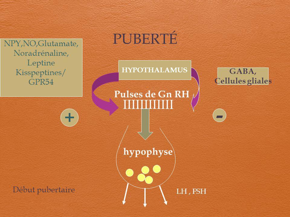 PUBERTÉ LH, FSH hypophyse Pulses de Gn RH HYPOTHALAMUS NPY,NO,Glutamate, Noradrénaline, Leptine Kisspeptines/ GPR54 + GABA, Cellules gliales IIIIIIIII