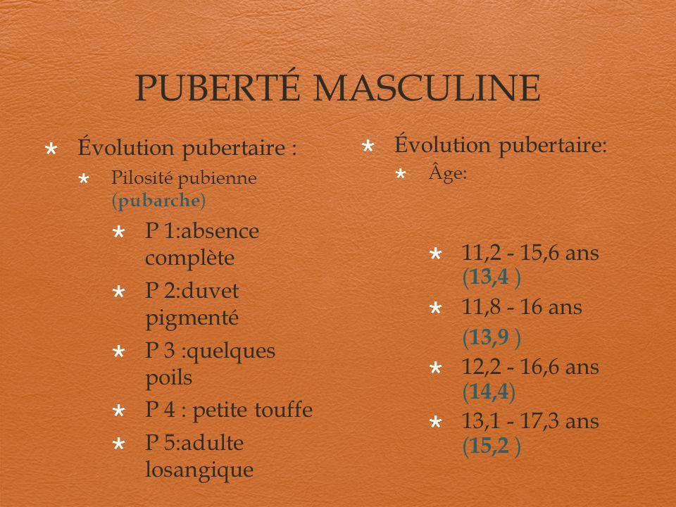 PUBERTÉ MASCULINE Évolution pubertaire : Pilosité pubienne ( pubarche ) P 1:absence complète P 2:duvet pigmenté P 3 :quelques poils P 4 : petite touff