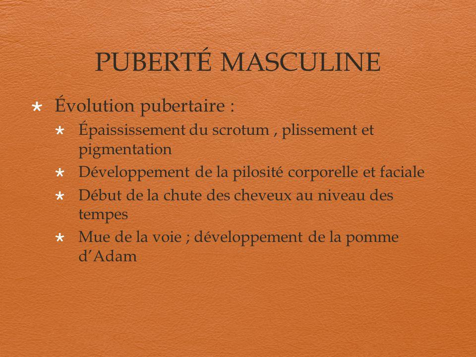 PUBERTÉ MASCULINE Évolution pubertaire : Épaississement du scrotum, plissement et pigmentation Développement de la pilosité corporelle et faciale Débu