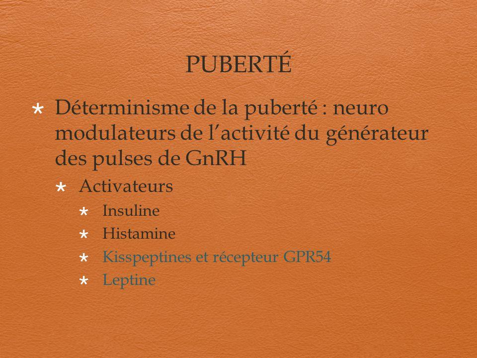 PUBERTÉ Déterminisme de la puberté:neuro modulateurs de lactivité du générateur des pulses de GnRH Inhibiteurs/activateurs Progestérone E2 Dopamine Glutamate Neuropeptide Y