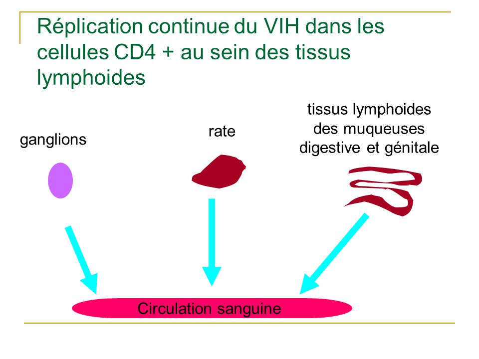 Etapes initiales de l infection VIH
