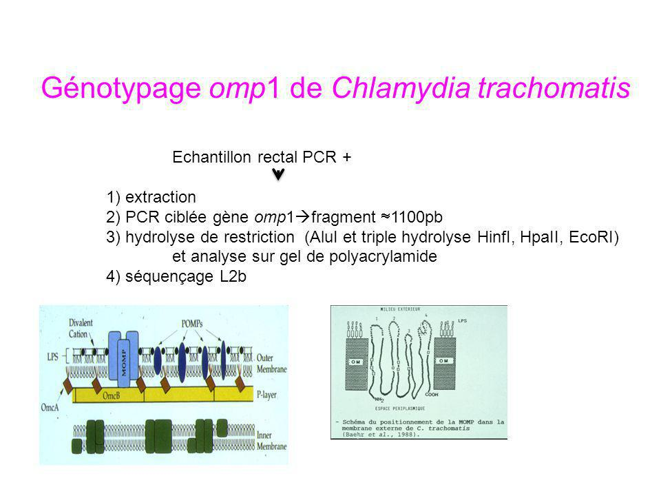 Génotypage omp1 de Chlamydia trachomatis Echantillon rectal PCR + 1) extraction 2) PCR ciblée gène omp1 fragment 1100pb 3) hydrolyse de restriction(Al
