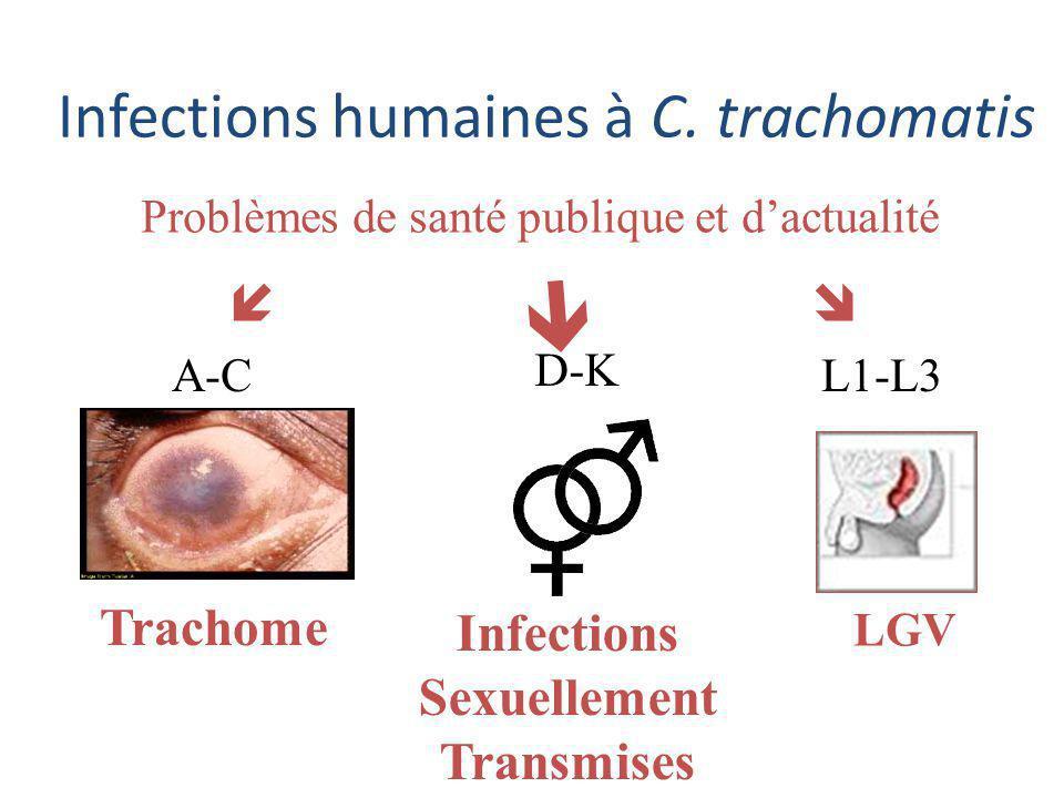 Problèmes dactualité La plus fréquente des IST bactériennes IST à C.