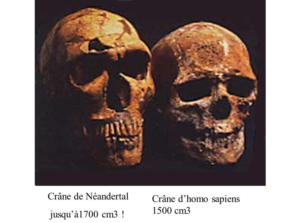 Crâne de Néandertal jusquà1700 cm3 ! Crâne dhomo sapiens 1500 cm3