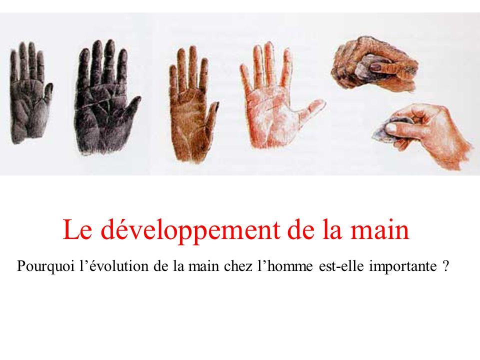 Le développement de la main Pourquoi lévolution de la main chez lhomme est-elle importante ?