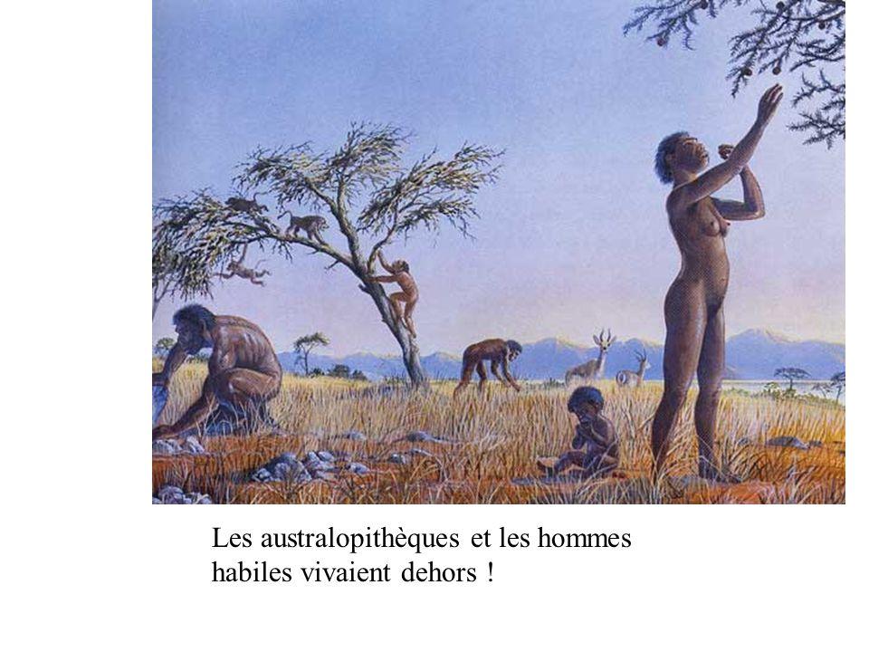 Les australopithèques et les hommes habiles vivaient dehors !
