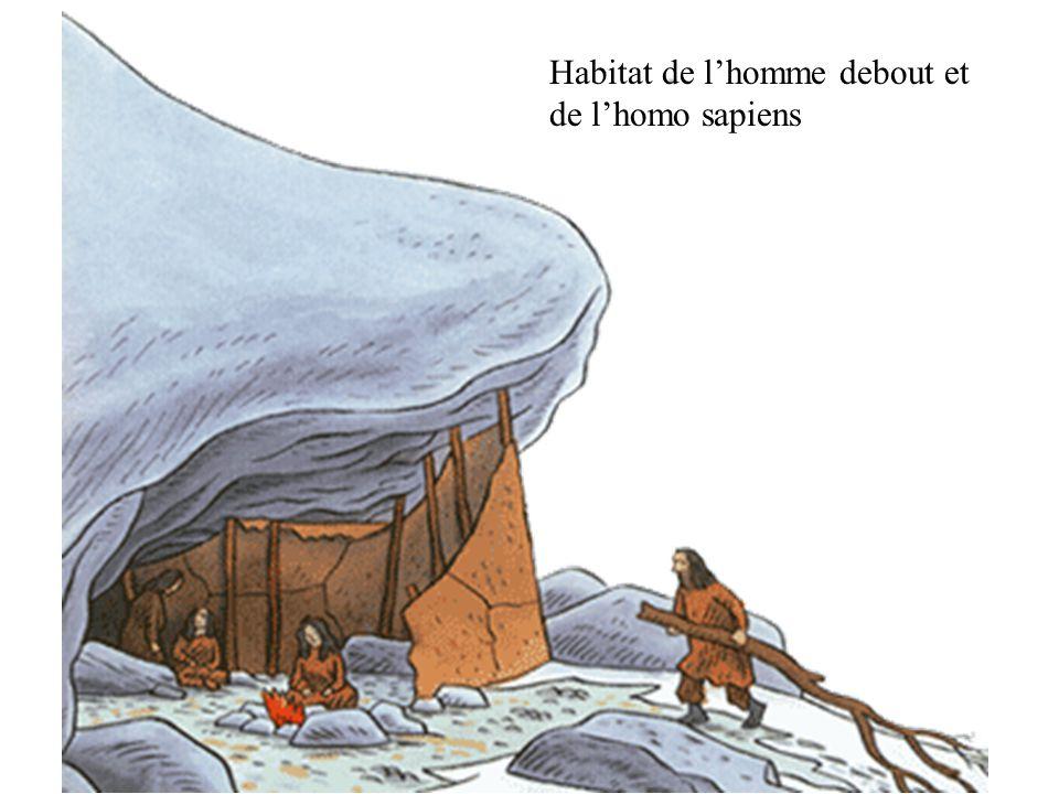 Habitat de lhomme debout et de lhomo sapiens