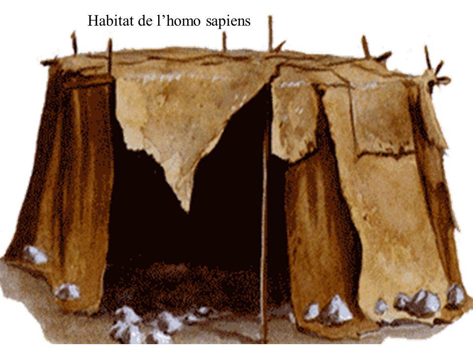 Habitat de lhomo sapiens