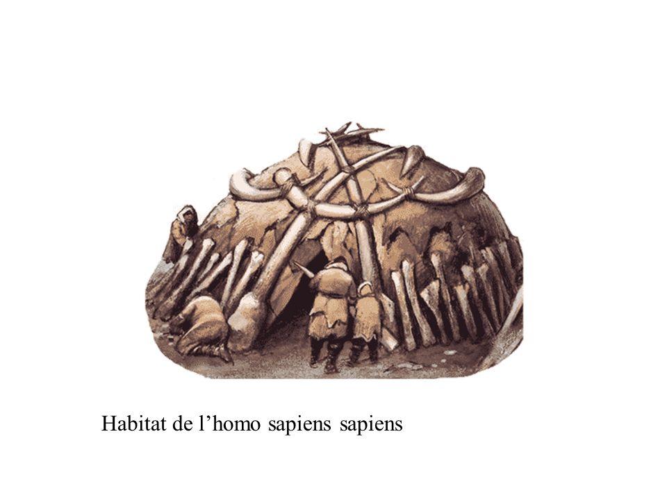 Habitat de lhomo sapiens sapiens