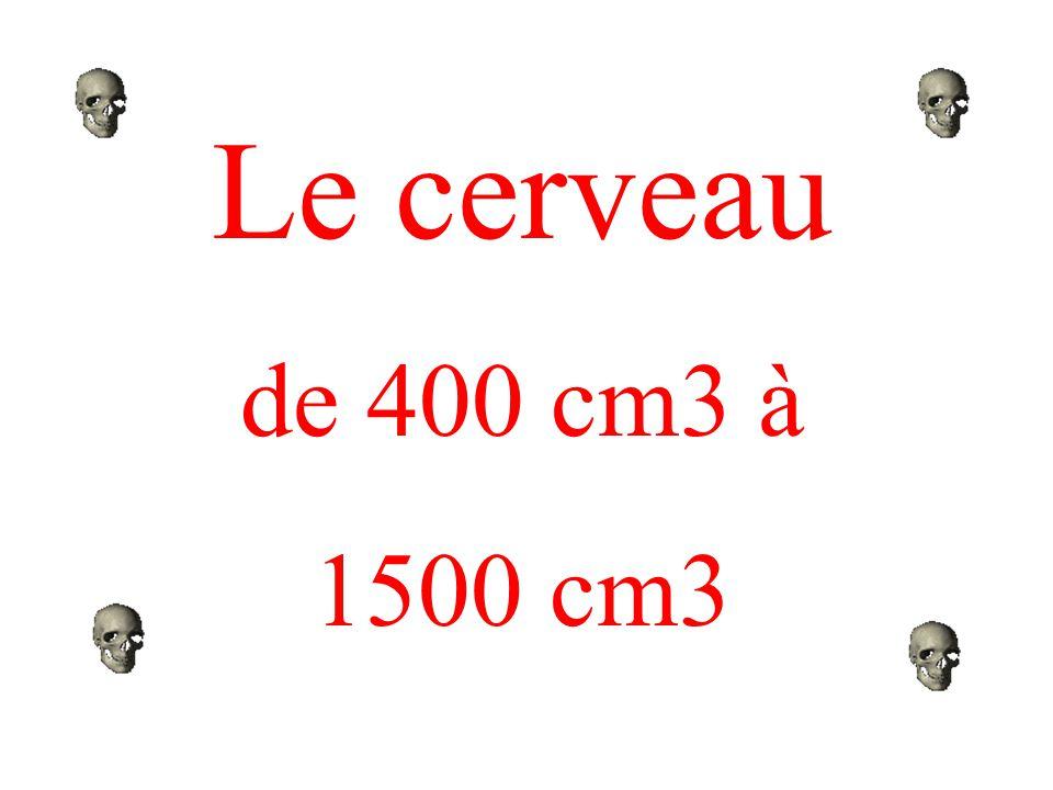 Le cerveau de 400 cm3 à 1500 cm3