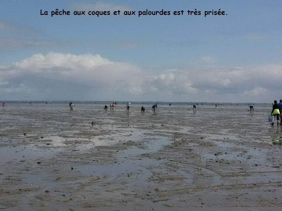 Lors des grandes marées, les pêcheurs affluent et les voitures se garent comme elles peuvent sur le bord de la chaussée.