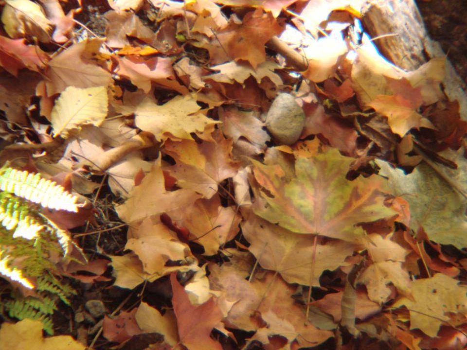 Symphonie des couleurs Jusqu'au 15 octobre, la Symphonie des couleurs bat son plein alors que la montagne, enflammée de rouge, jaune et orangé sera à