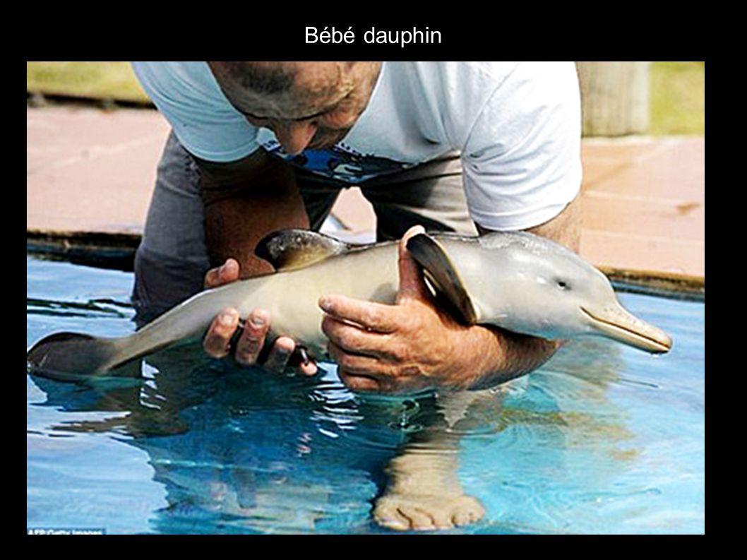 Bébé manchot rencontrant un bébé dauphin