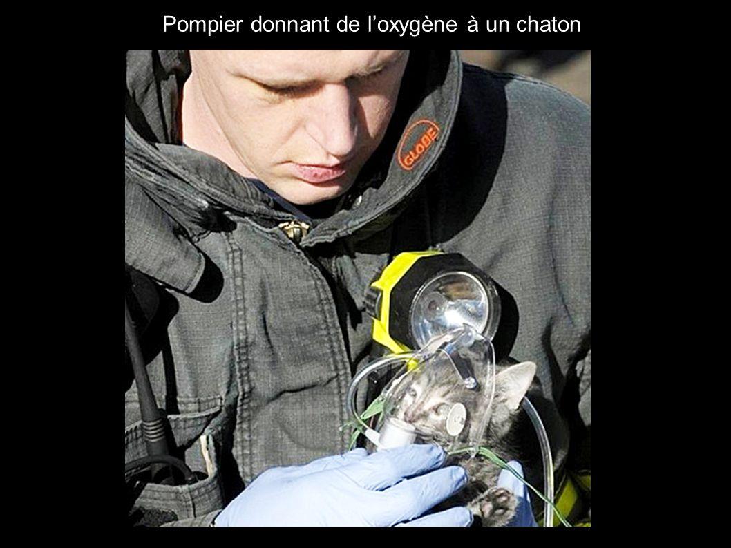 3 Pompier donnant de loxygène à un chaton
