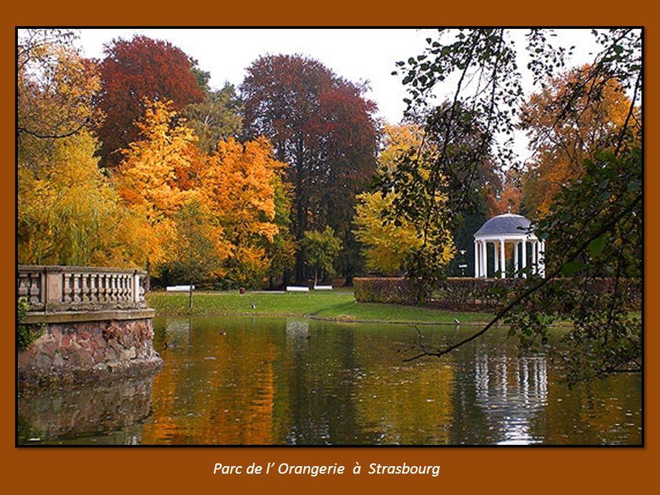 les feuilles mortes des Tuileries