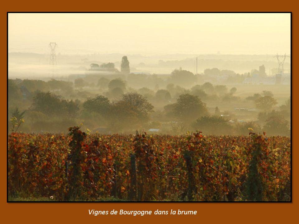 les Ors de Versailles