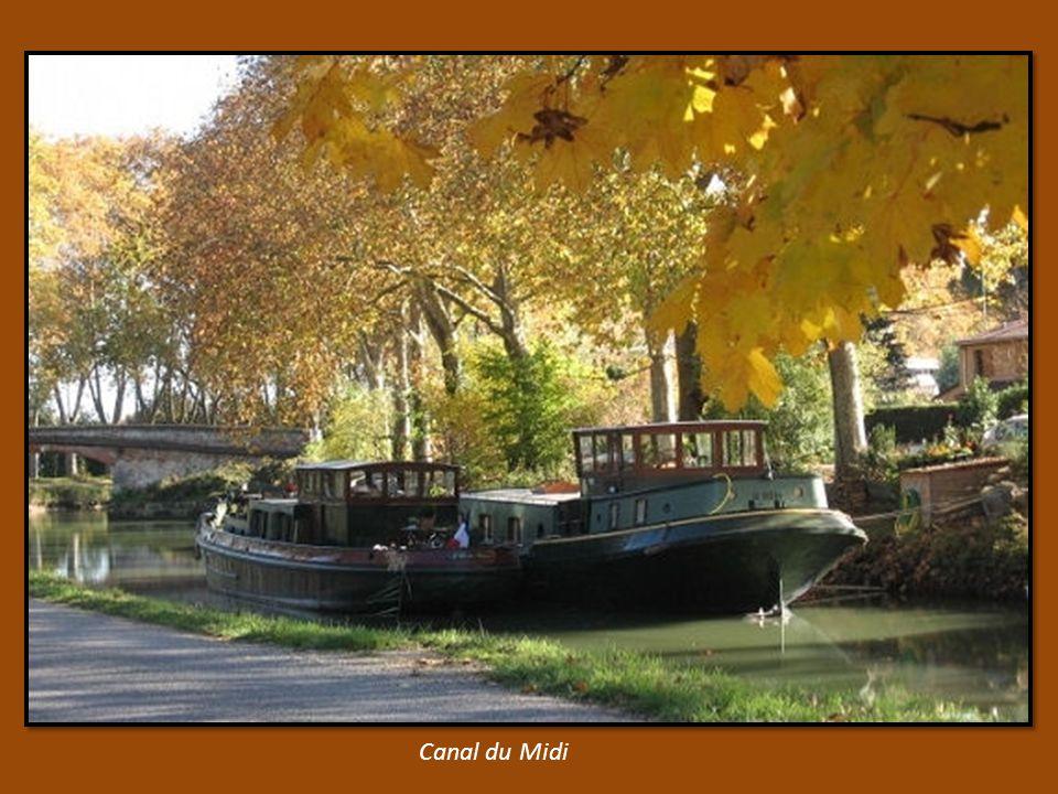 prés de Carcassonne dans les vignes