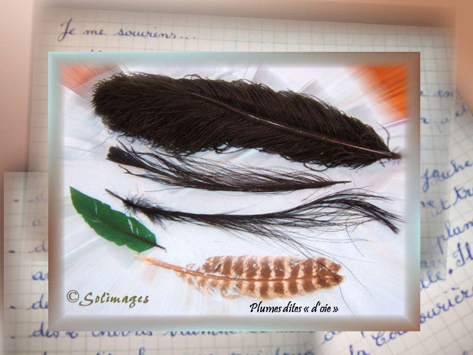 Boîtier à plumes