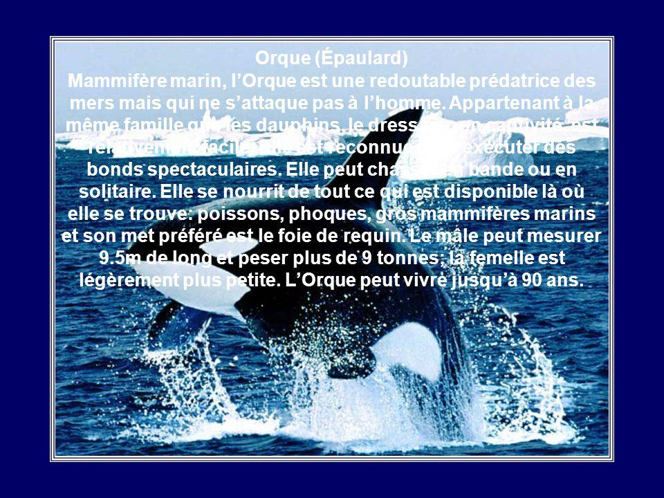 Narval Le déclin de la population de ce mammifère marin, aussi appelé «Licorne des mers», seffectue à un rythme alarmant: 10% par année. La corne est