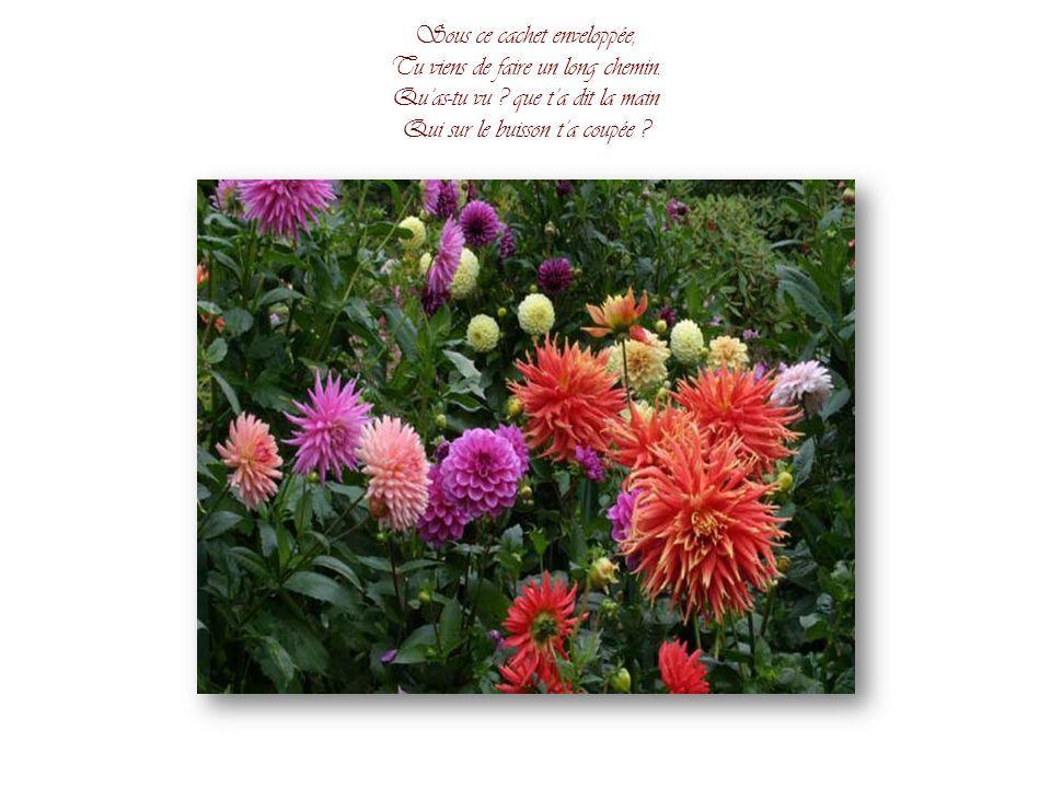 Que me veux-tu, chère fleurette, Aimable et charmant souvenir ? Demi-morte et demi-coquette, Jusquà moi qui te fait venir ?