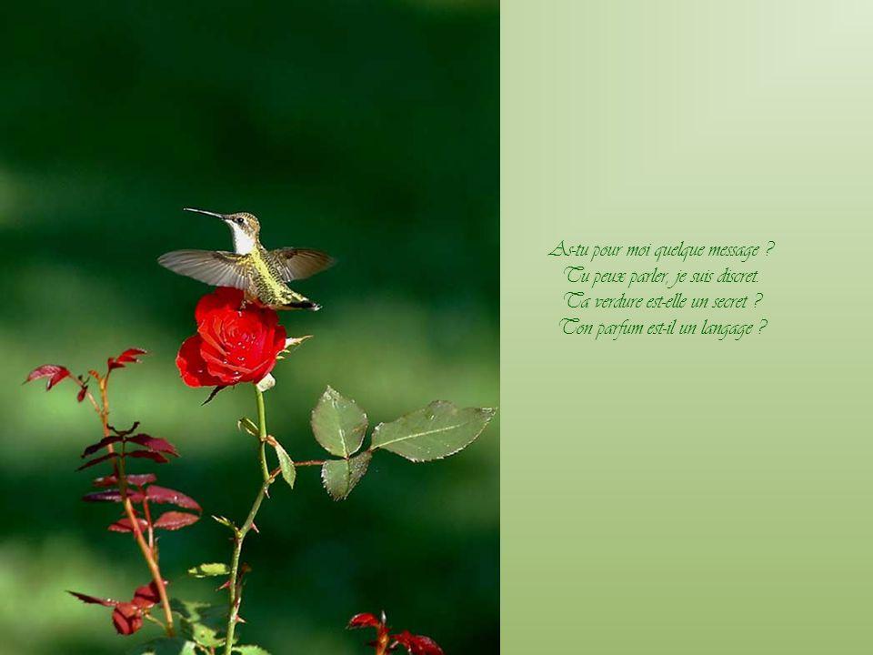 Ta fleur, hélas ! a la blancheur De la désolante innocence ; Mais de la craintive espérance Ta feuille porte la couleur.