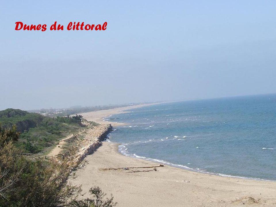 Dunes du littoral