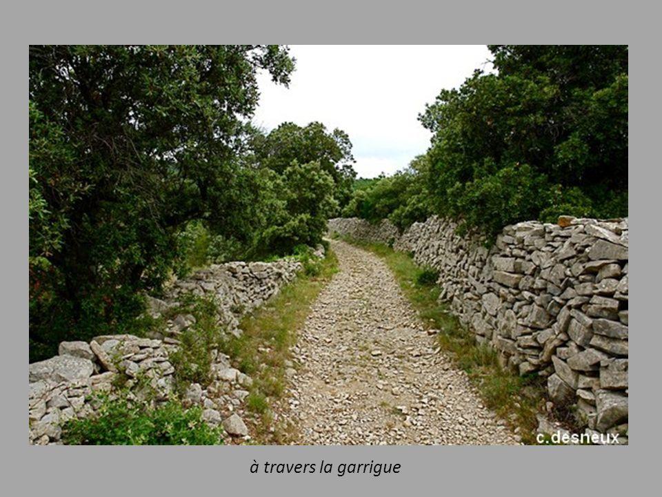 Carte du Chemin des Verriers (en vert)