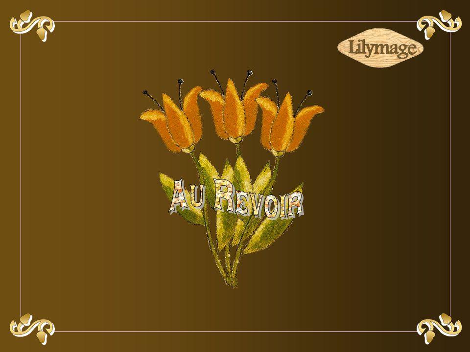 Expressions et explications prises sur le site Expressio. Musique : Amadeus de J. Delance et J. Ferchit. Conception, réalisation : L. Cavallari. Date