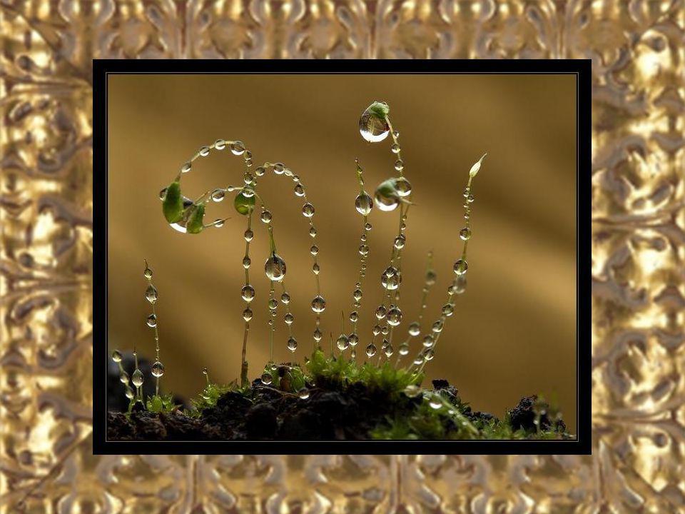 Musique: À ma manière – Enrique Chia - Photos prises sur le Net.