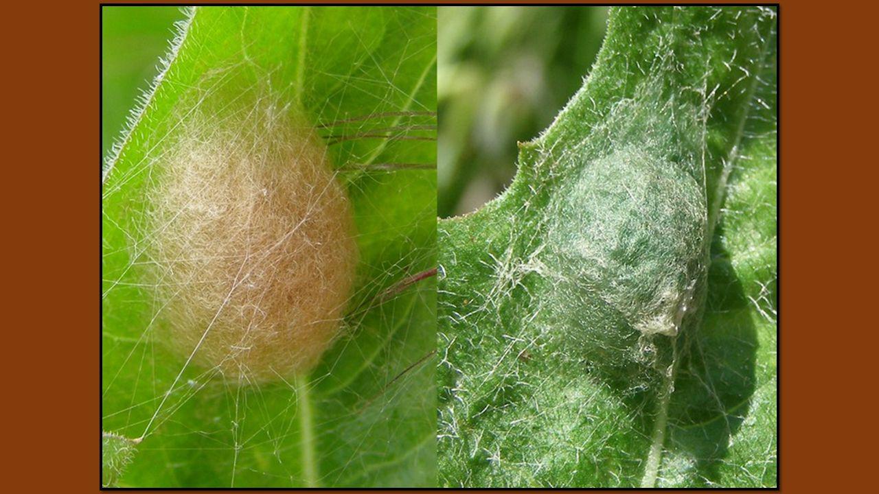 Ils disaient ces années de sériciculture Et leurs feuilles offertes à lautel de la soie Lorsque dans le hameau les femmes dautrefois Liaient un sac de
