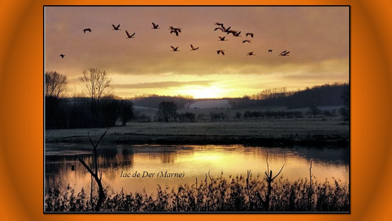 lac de Der (Marne)